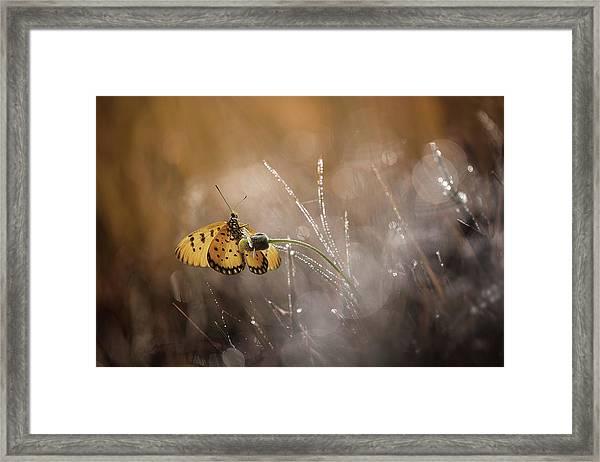 Harmony Framed Print by Ahmad Baihaki