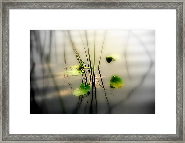 Harmony Zen Photography II Framed Print