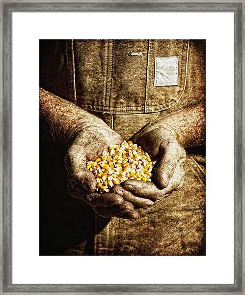 Harvest In His Hands Framed Print