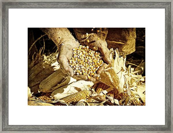Harvest Of Plenty Framed Print