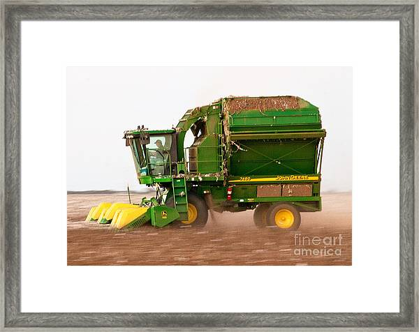 Framed Print featuring the photograph Harvesting Cotton by Mae Wertz