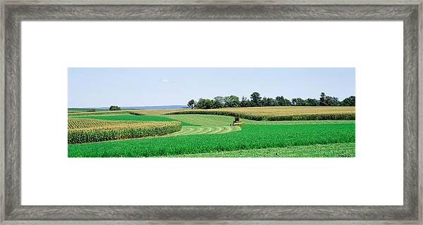 Harvesting, Farm, Frederick County Framed Print