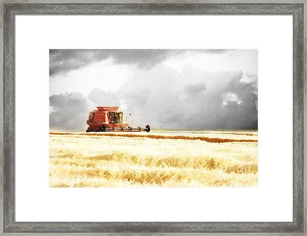 Harvesting The Grain Framed Print