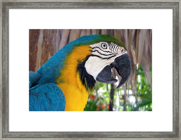 Framed Print featuring the photograph Harvey The Parrot 2 by Bob Slitzan