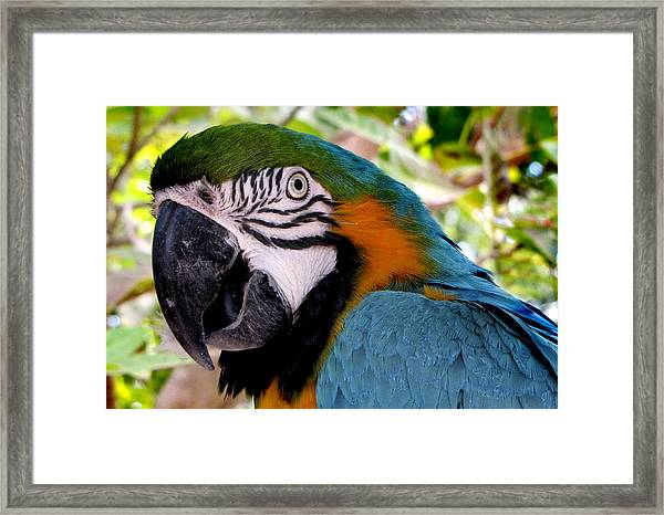 Framed Print featuring the photograph Harvey by Bob Slitzan