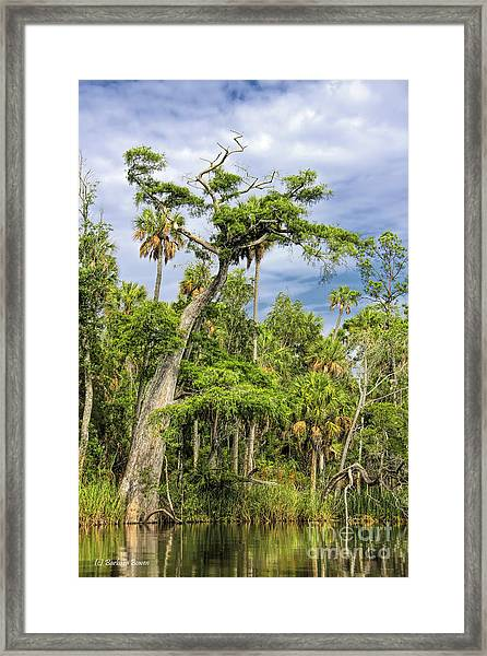 Hatrack Cypress Framed Print