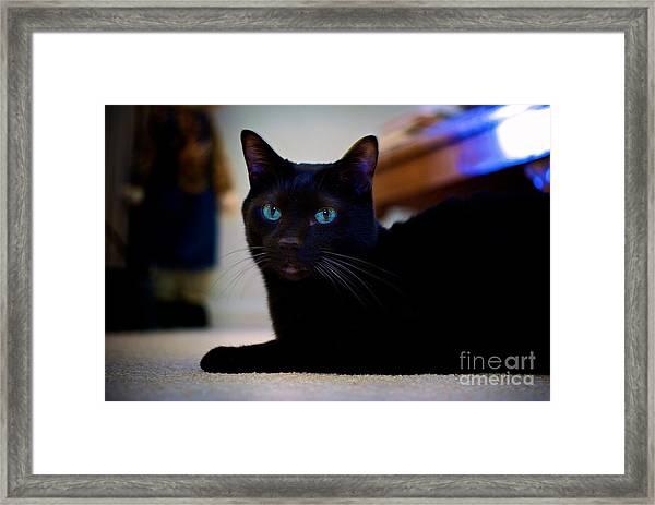 Havana Brown Cat Framed Print