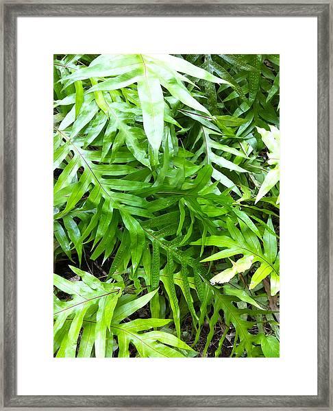 Hawaiian Foliage Framed Print