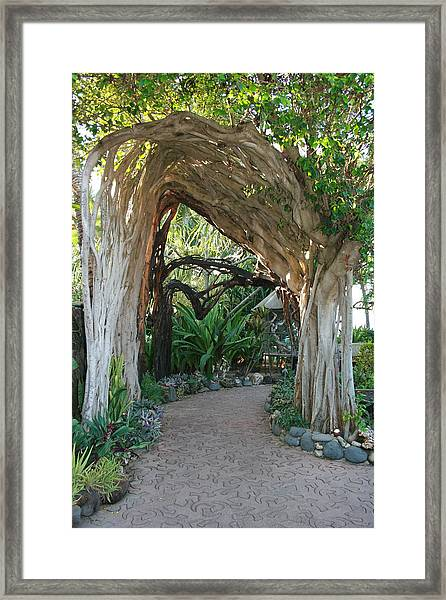 Hawaiian Pathway Framed Print