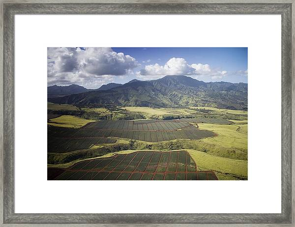 Hawaiian Pineapple Fields Framed Print
