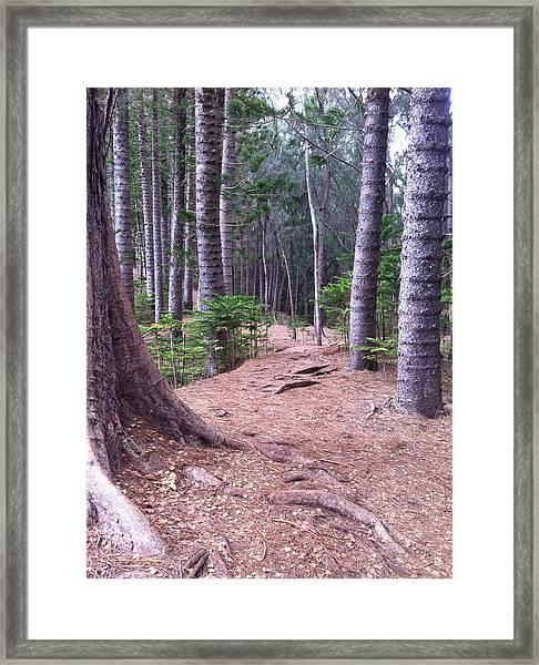 Hawaiian Tree Path Framed Print