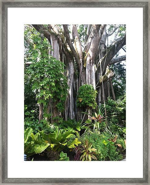 Hawaiian Tropical Forest Framed Print
