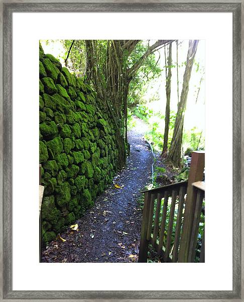 Hawaiian Walkway Framed Print
