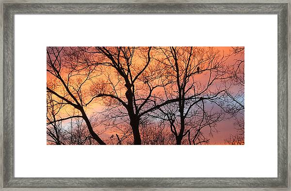 Hawk At Sunrise Framed Print