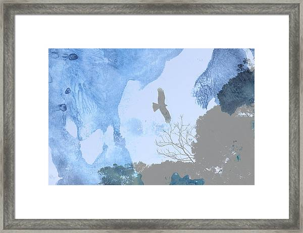 Hawk In Flight 1 Framed Print