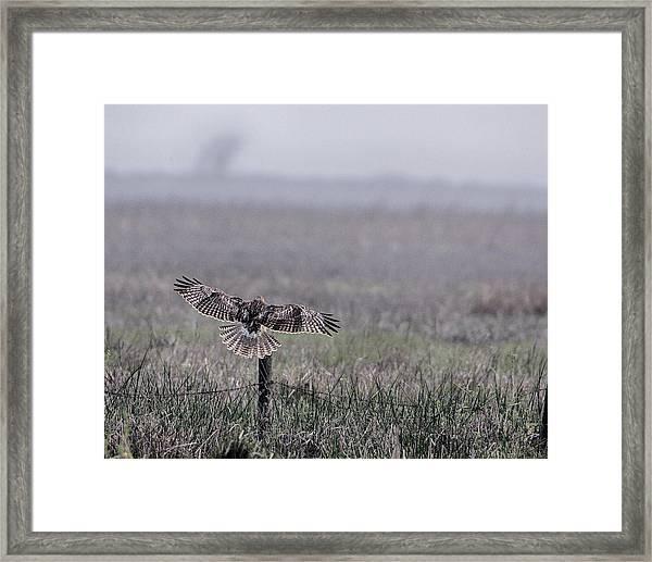 Hawk Landing Framed Print
