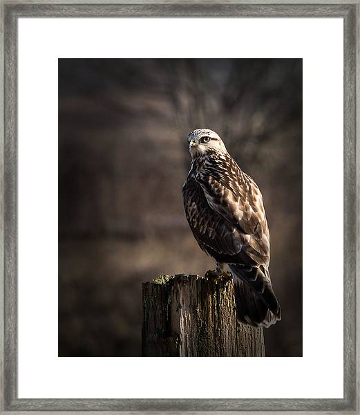 Framed Print featuring the photograph Hawk On A Post by Randy Hall