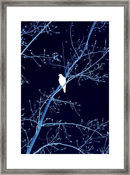 Hawk Silhouette On Blue Framed Print