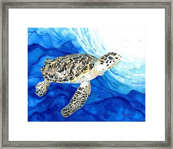Hawksbill Sea Turtle 2 Framed Print