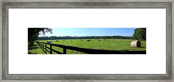 Hay Hay Framed Print