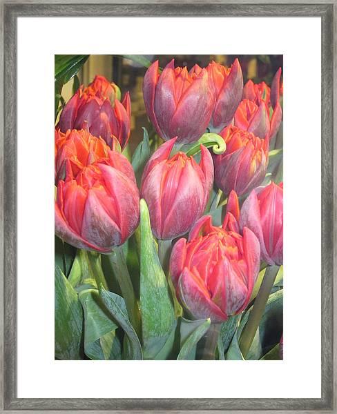 Hazardous Beauty Framed Print