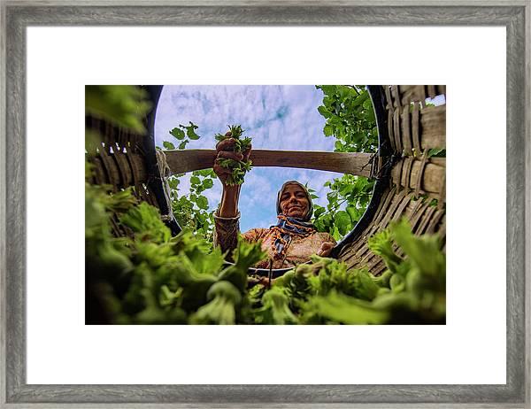 Hazelnut Framed Print by Suleyman Uzumcu