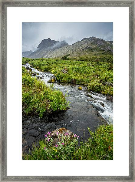 Headwaters In Summer Framed Print
