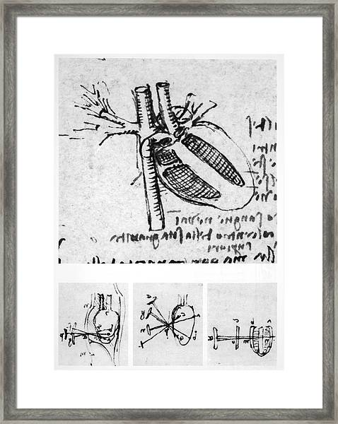 Heart Anatomy Framed Print by