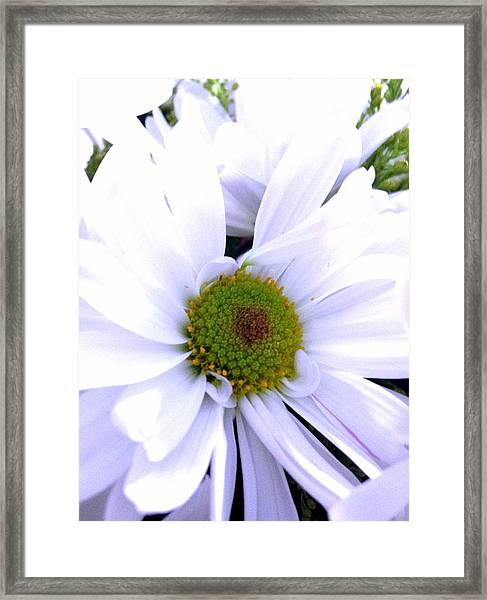 Heart Of The Daisy Framed Print