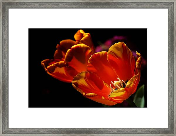 Heart Of The Flower Framed Print