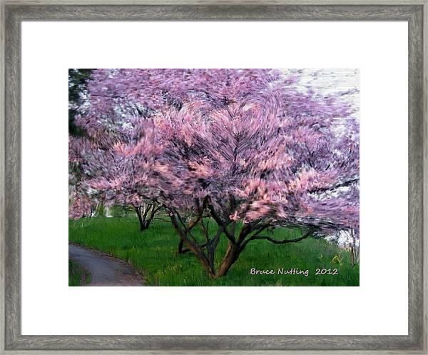 Heartfelt Cherry Blossoms Framed Print