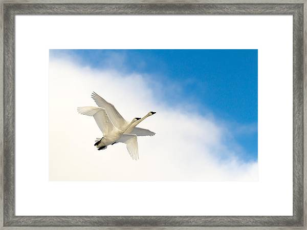 Heaven Born Framed Print