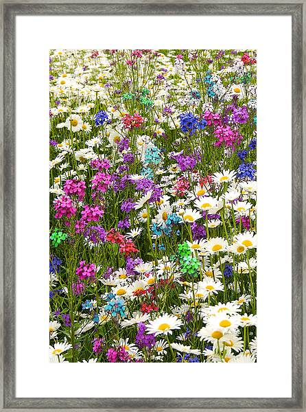 Heavenly Flowers 2 Framed Print