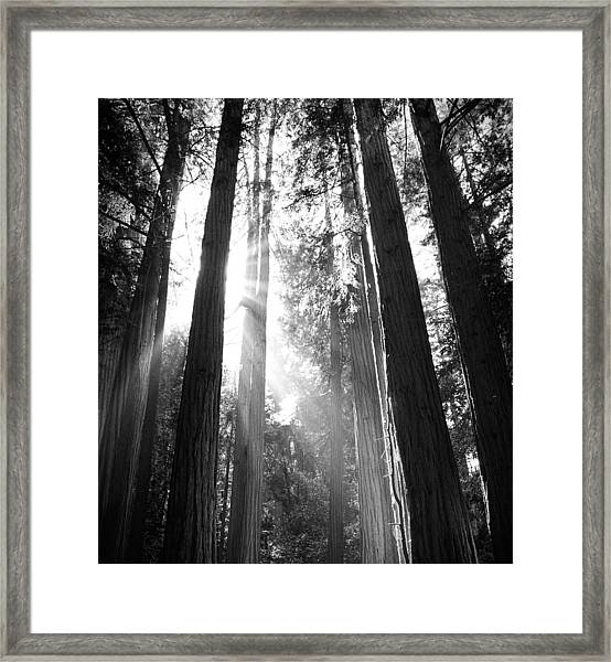 Heavenly Forest Framed Print