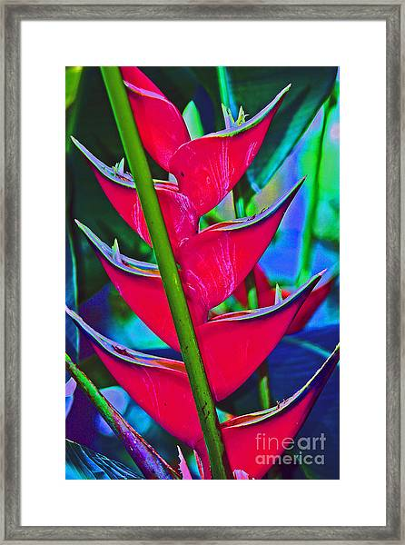 Heliconia Abstract Framed Print