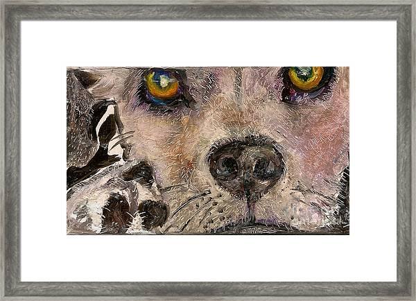 Hello Dog Framed Print by Donna Chaasadah