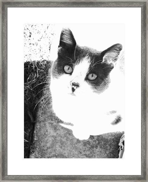 Hello Kitty Framed Print