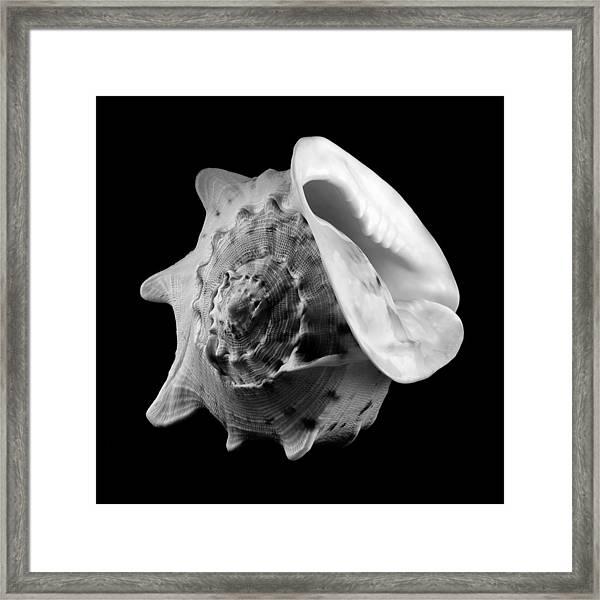 Helmet Shell Framed Print