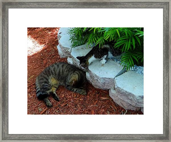 Hemingway Cats Framed Print