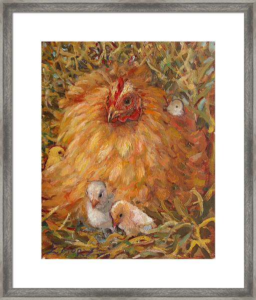 Hen And Chicks Framed Print