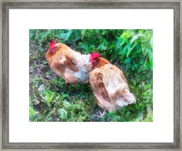 Hen Party Framed Print