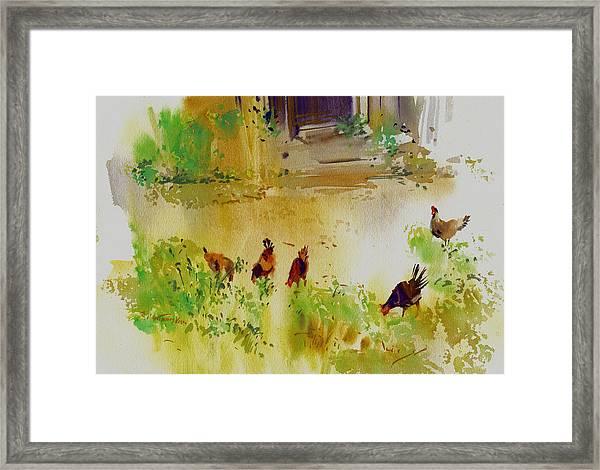Hen Pecked Framed Print