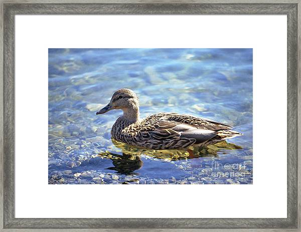 Hen's Reflection Framed Print