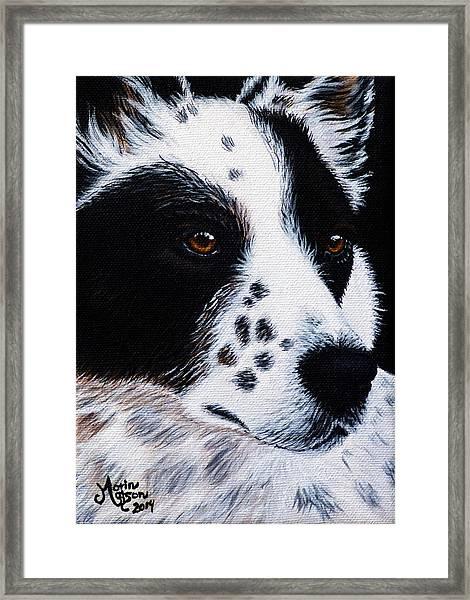 Herding Dog Framed Print