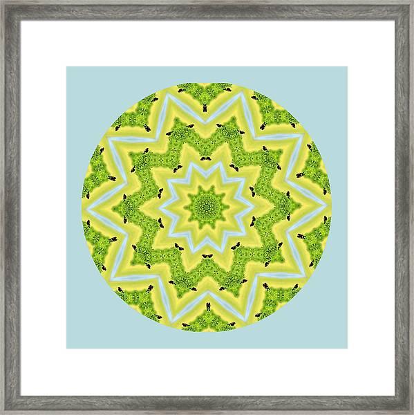 Here Birdie Birdie Mandala Framed Print