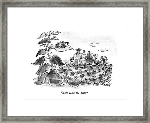 Here Come The Pests Framed Print