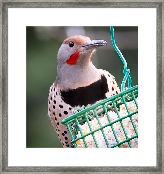 Here I Am Framed Print by Ronda Broatch