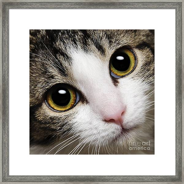 Here Kitty Kitty Close Up Framed Print