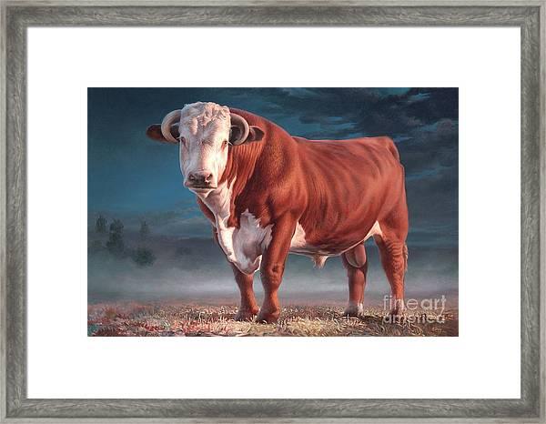 Hereford Bull Framed Print