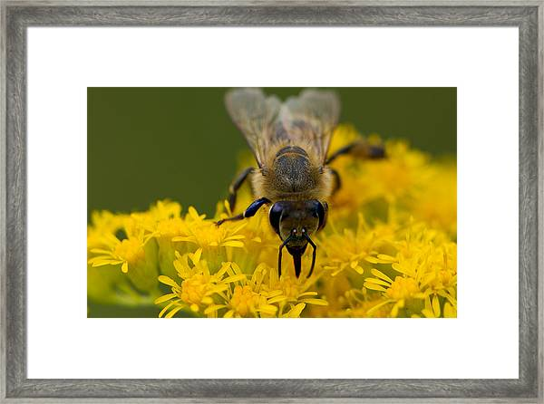 Here's Looking At You Honey Framed Print by John Hoey